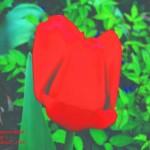 Trancendent Tulip #7