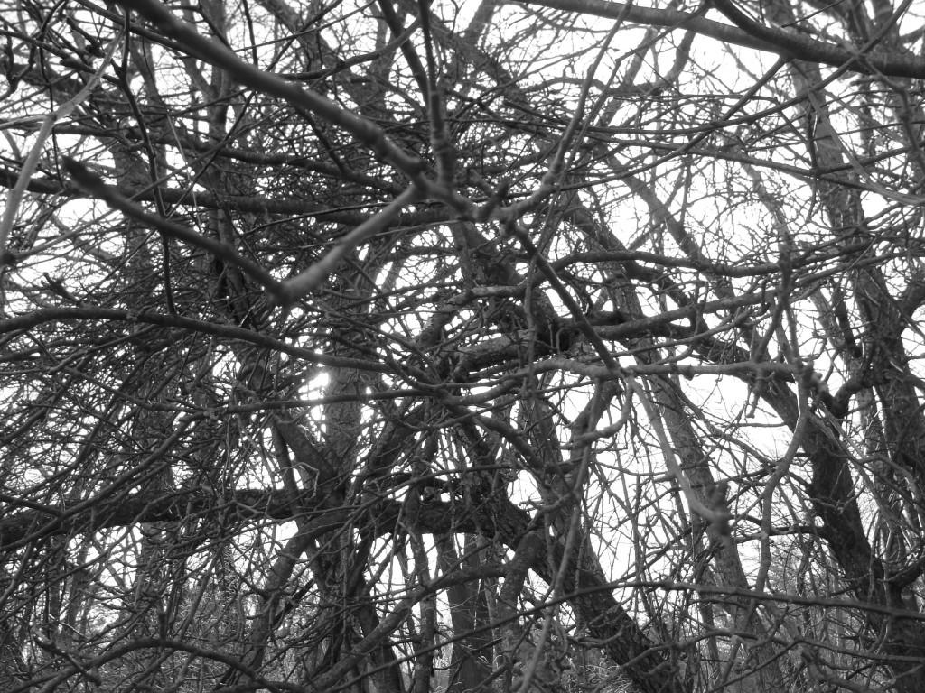 dark bush 2