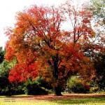 ORANGE TREE 2015