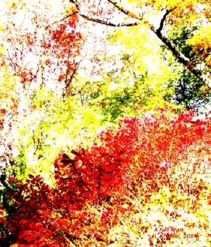a fall walk, 2014