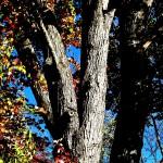 back yard tree enhanced