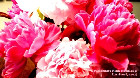 passionate pink 4