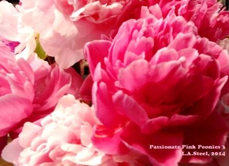 passionate pink peonies 3