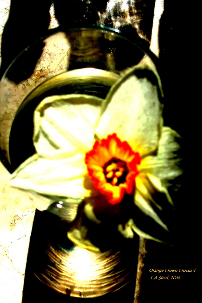 orange crown crocus 10