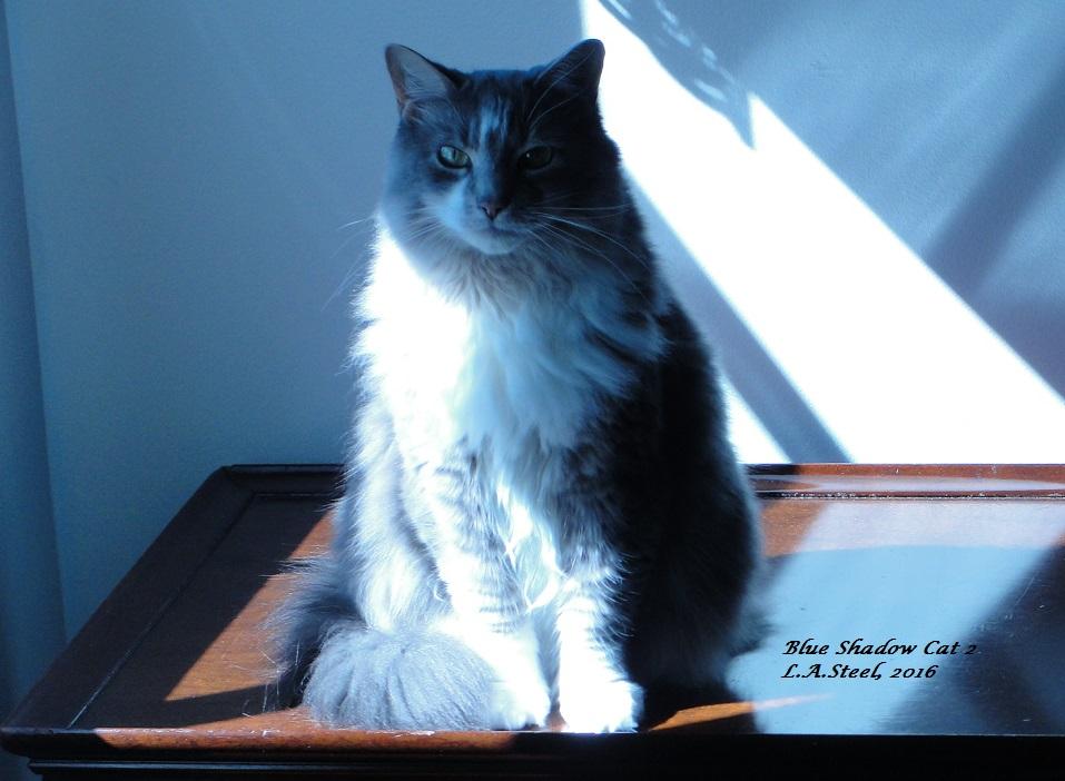 blue-shadow-cat-2