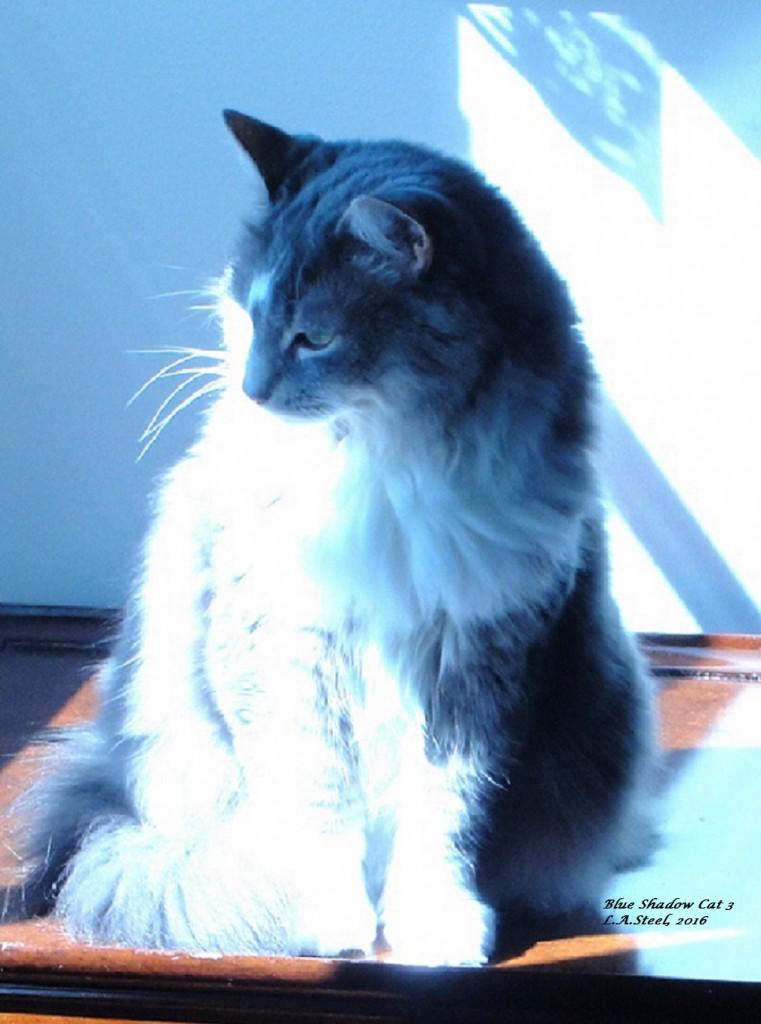 blue-shadow-cat-3