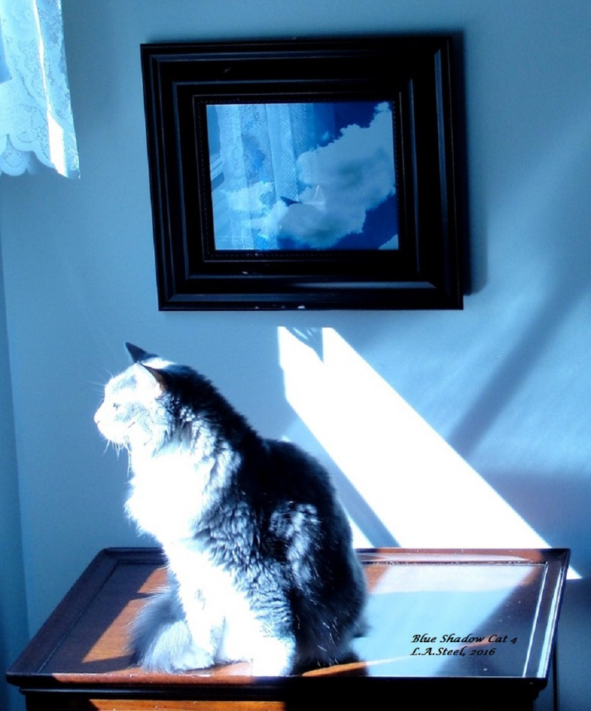 blue-shadow-cat-4