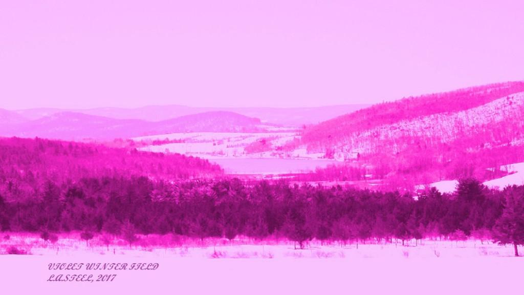 violet winter field 2017