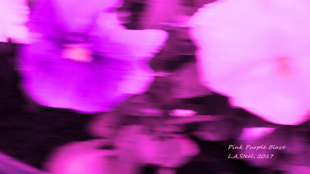 Pink Purple Blaze 2017