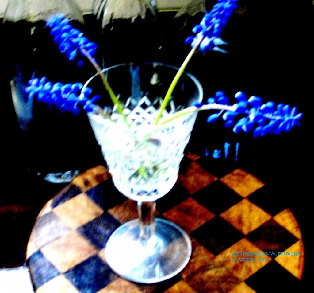 wild blue crystal flowers 2017 2