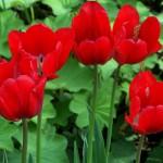 leilas spring garden