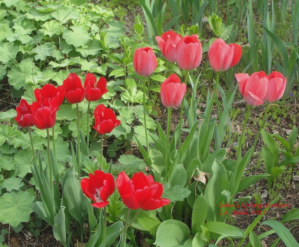 leilas spring garden.2