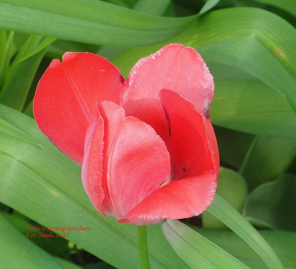leilas spring garden.4