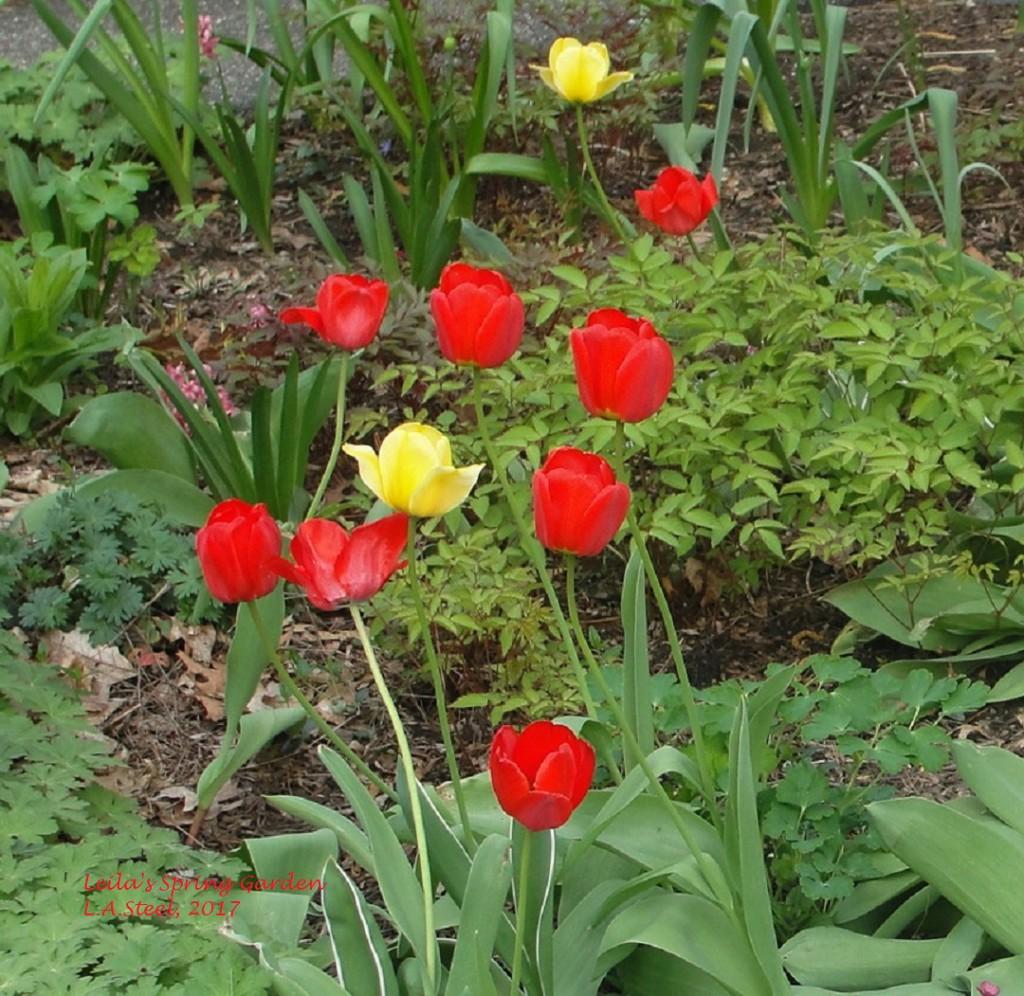 leilas spring garden.6