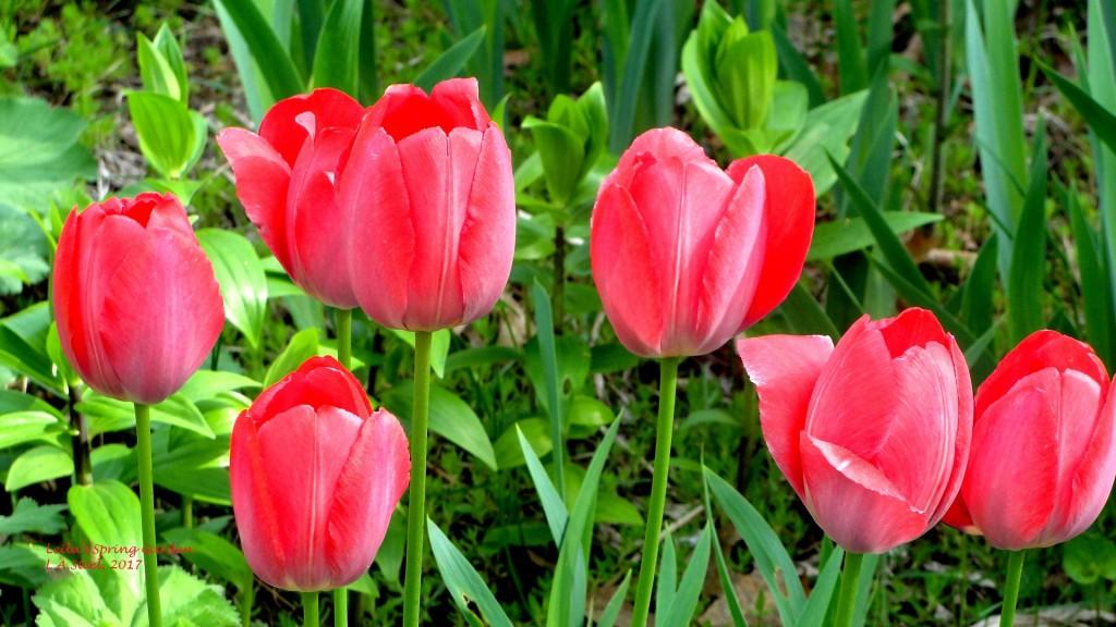 leilas spring garden.7