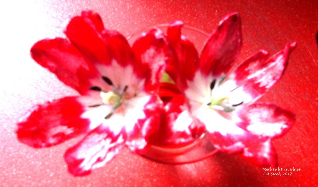 red tulips glass 10