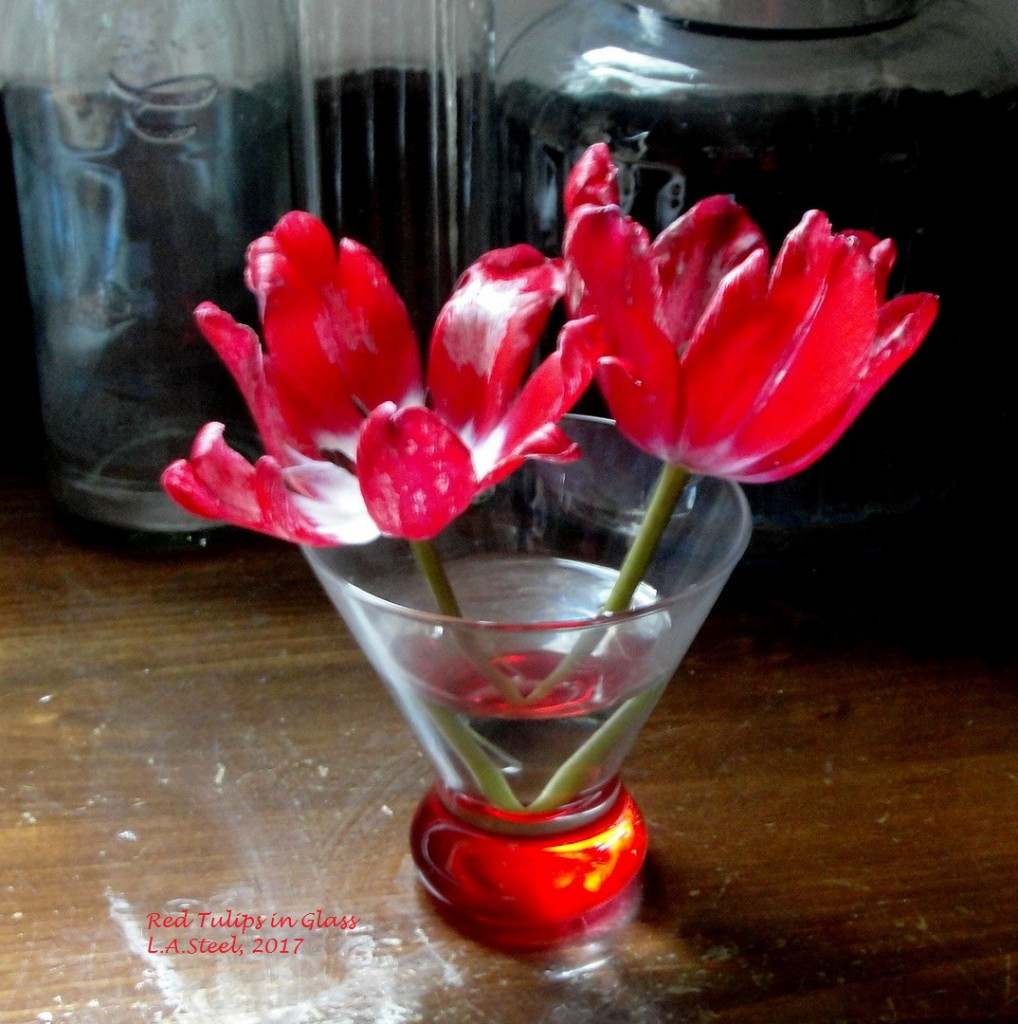 red tulips in glass 2