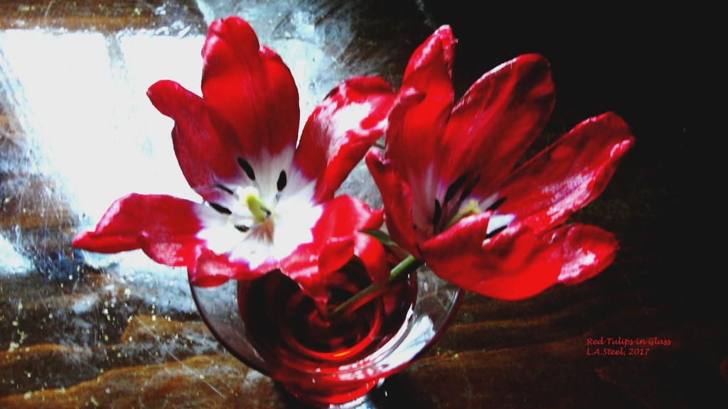 red tulips in glass 3
