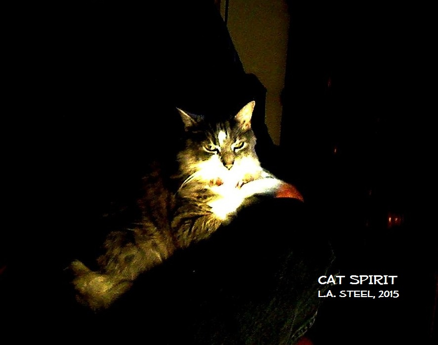 CAT SPIRIT 2015