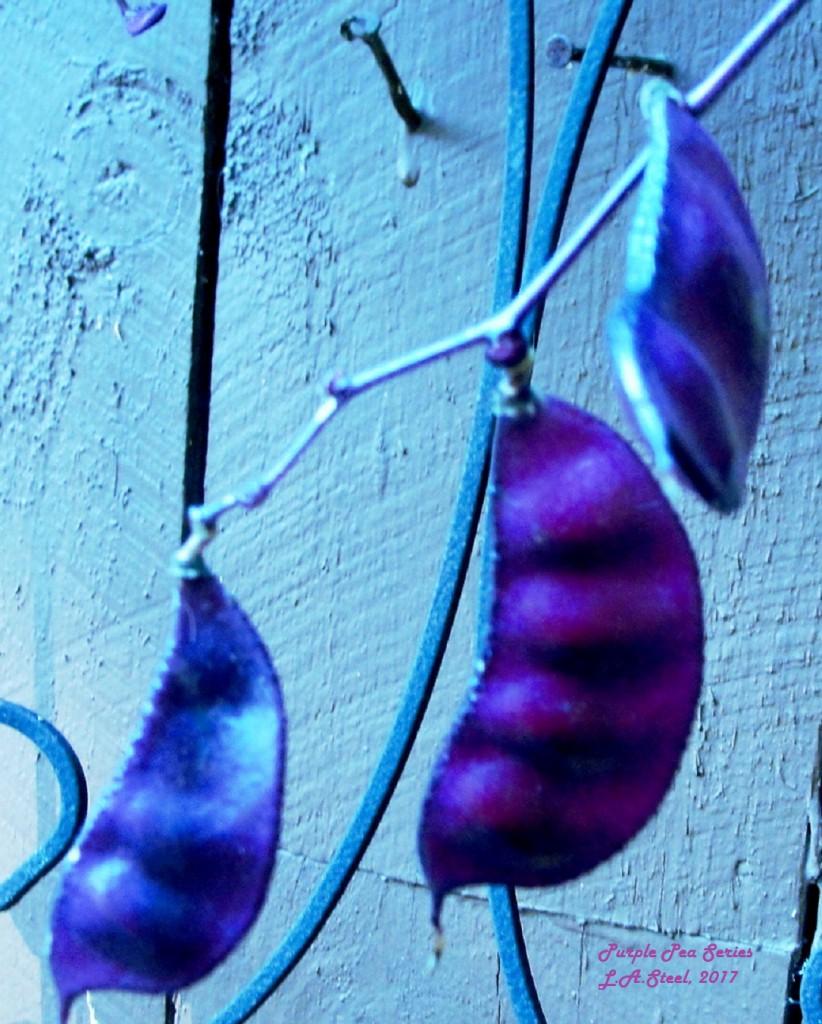 purple peas series 4 2017