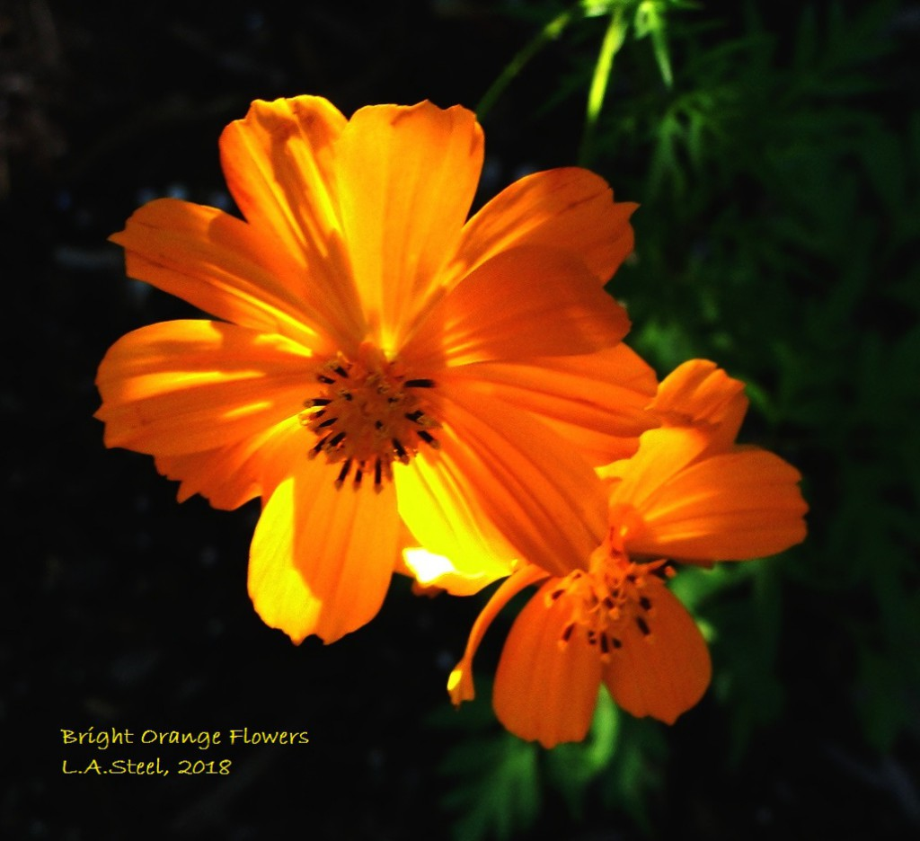 bright orange flowers 2018