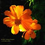 bright orange flowers 2018