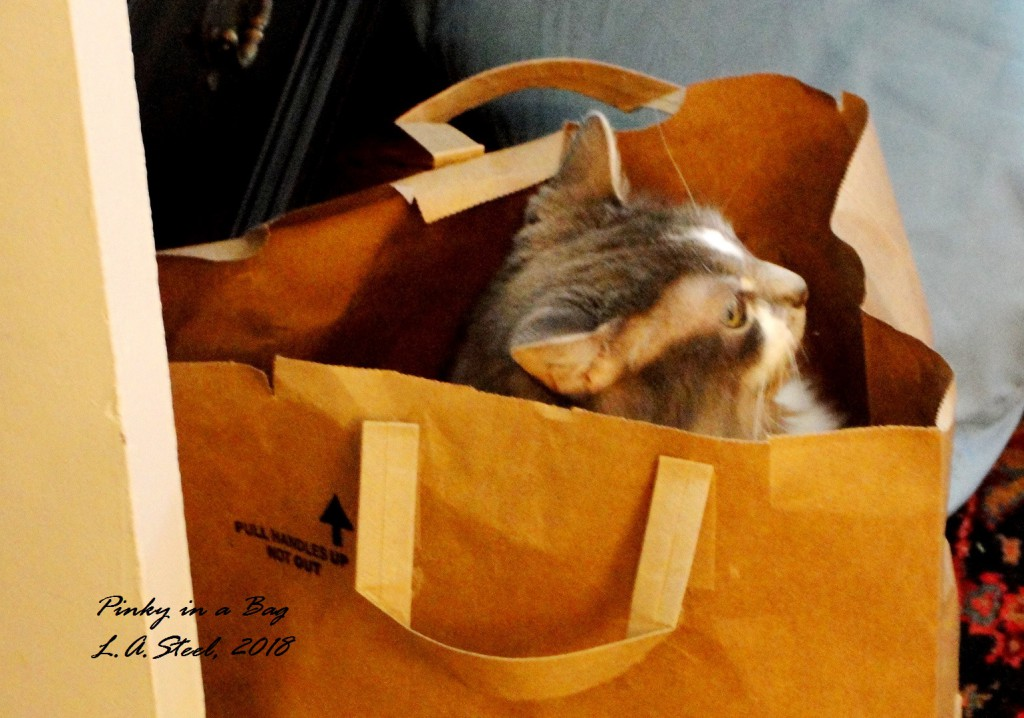 pinky in a bag 1 2018