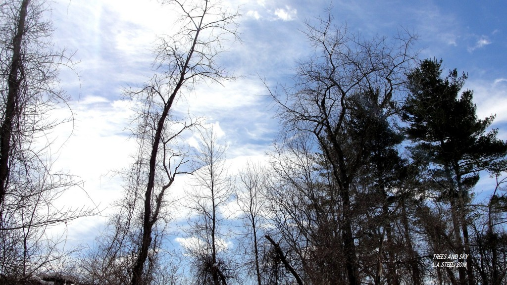 trees and sky 2018