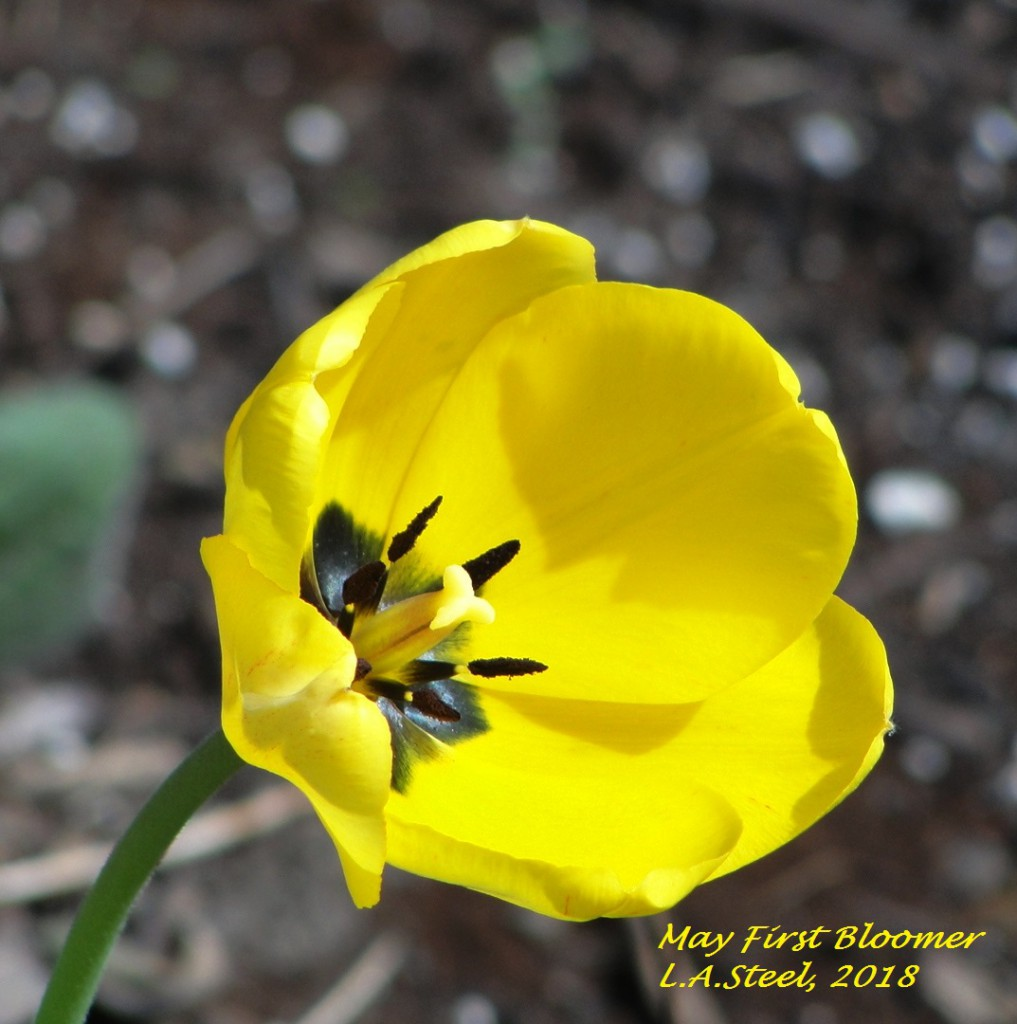 may first bloomer 2018