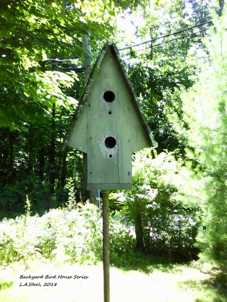 backyard bird house series 2018.jpg 1