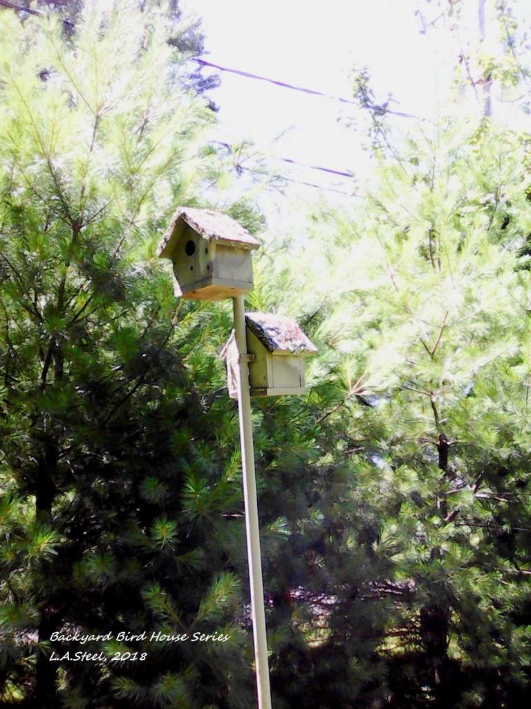 backyard bird house series 2018.jpg 2