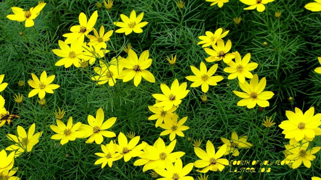 fourth of july flowers 11 2018 DSC07364