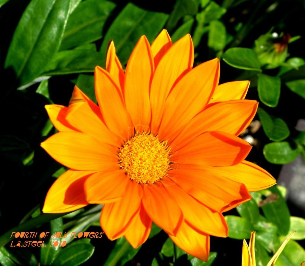 fourth of july flowers 20 2018 DSC07364