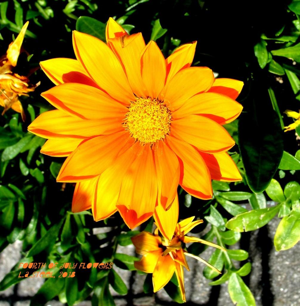 fourth of july flowers 2018 22 DSC07364