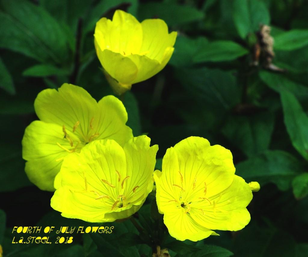 fourth of july flowers 5 2018 DSC07364