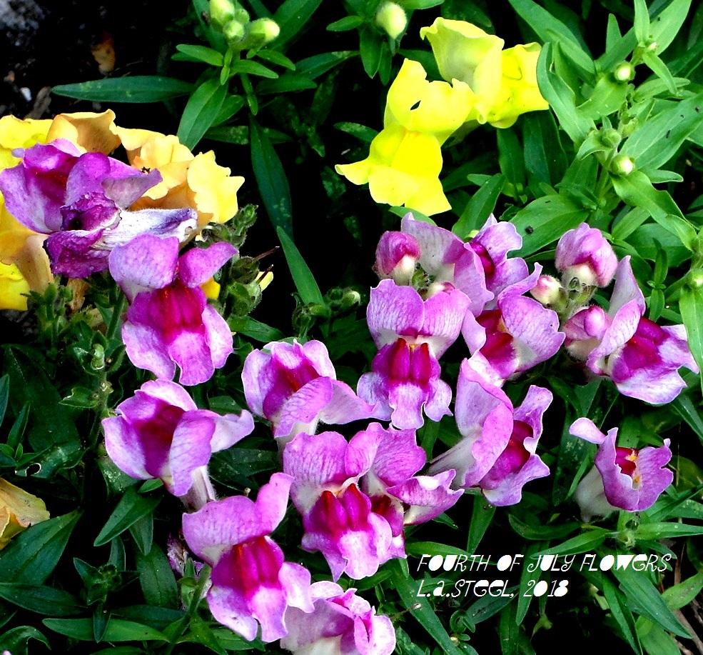 fourth of july flowers 7 2018 DSC07364