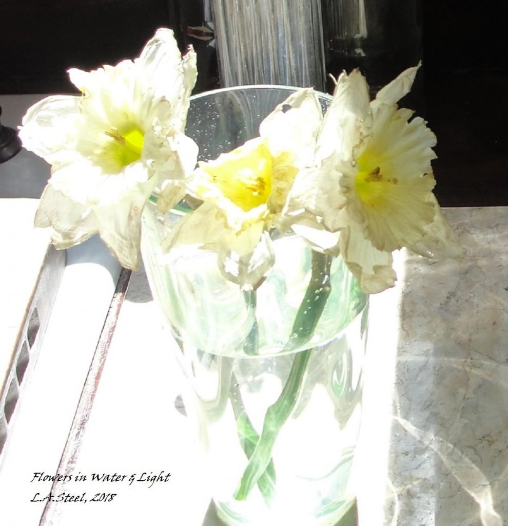 flowers in water & light 2018