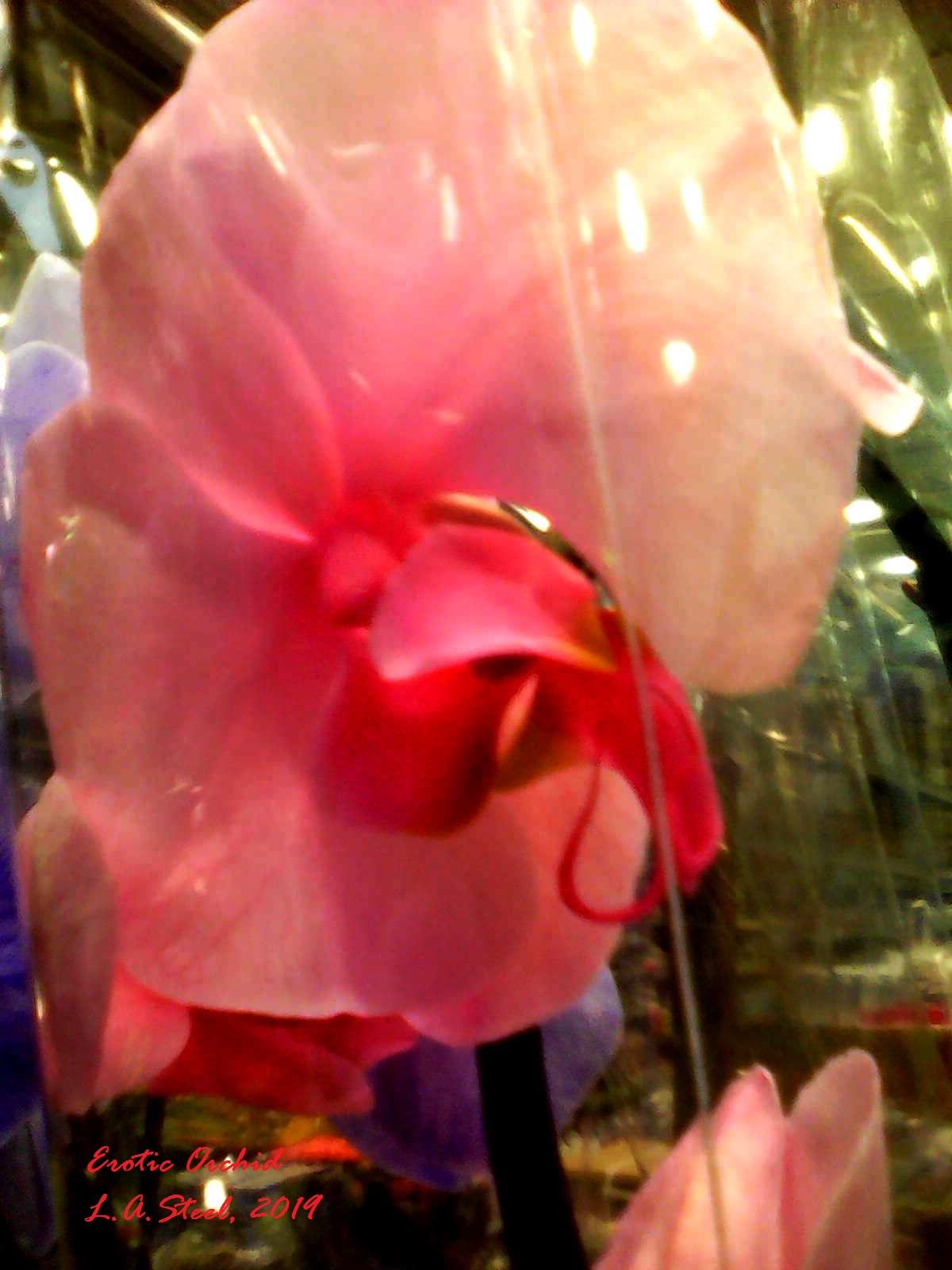 erotic orchid 2 2019