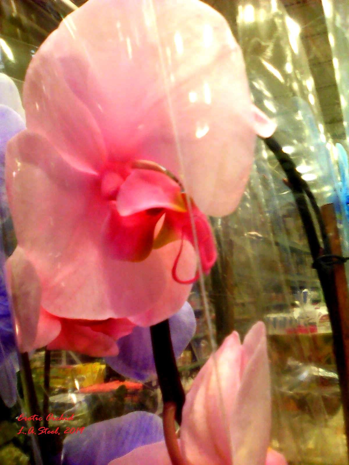erotic orchid 2019