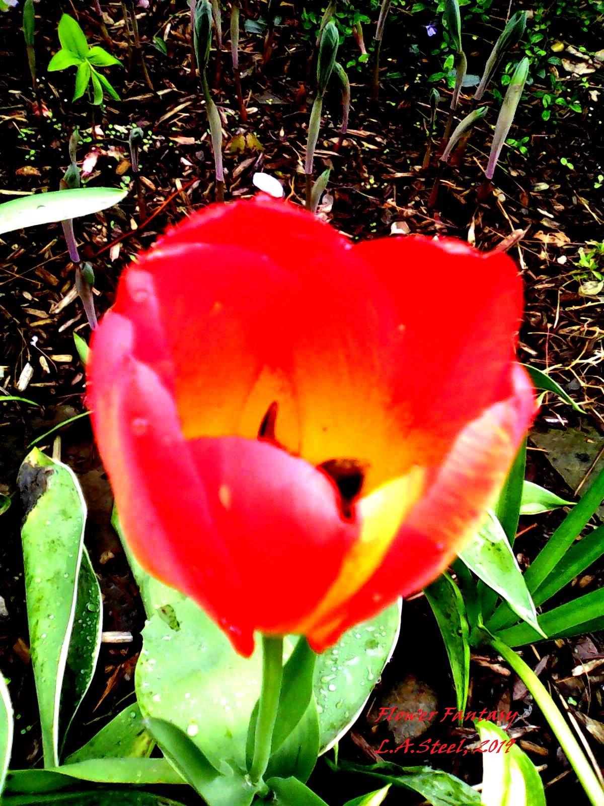 FLOWER FANTASY 5 2019