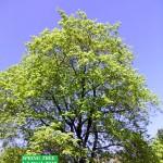 spring tree 1 2019