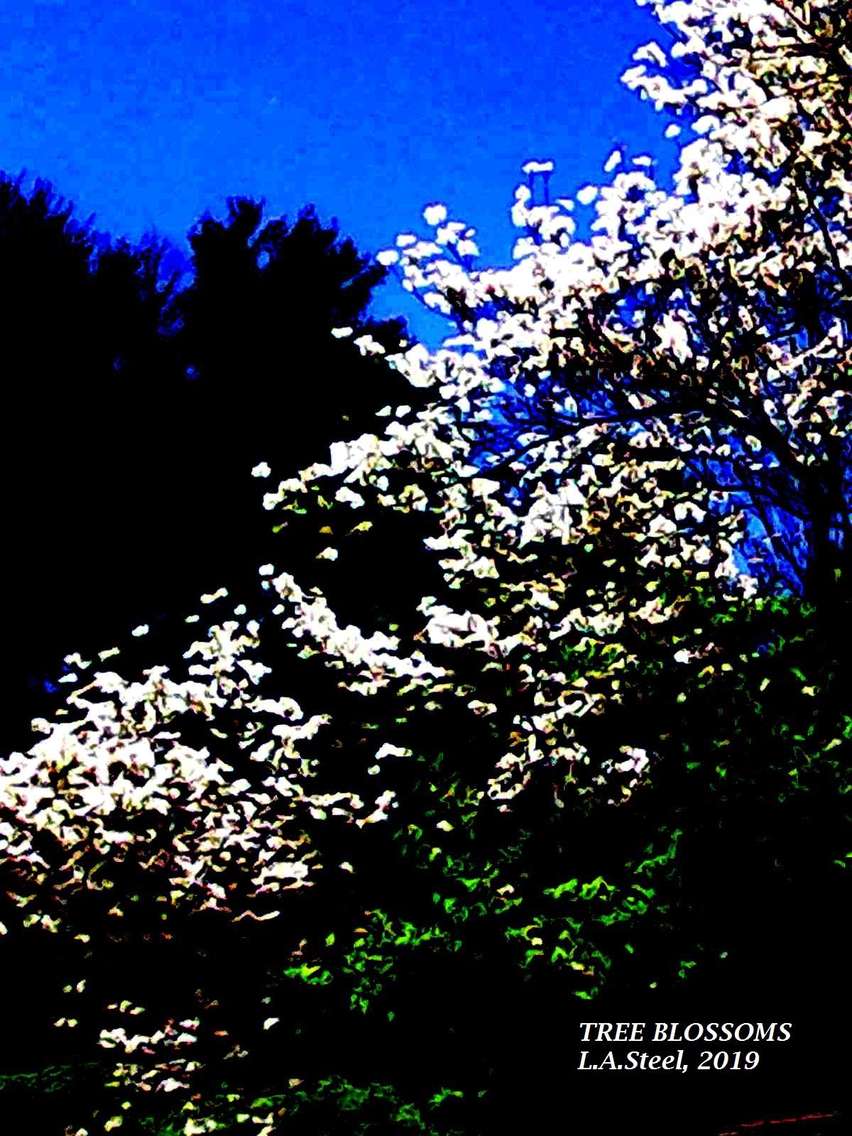 tree blossoms 2 2019