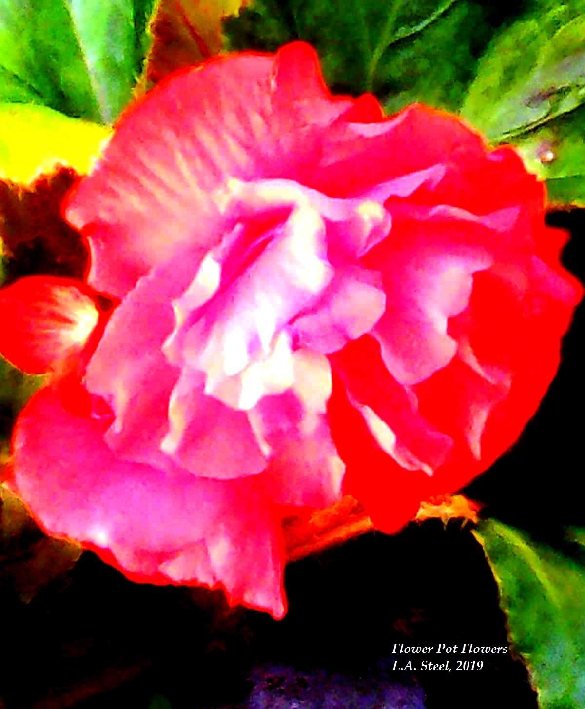 flower pot flowers 2 2019