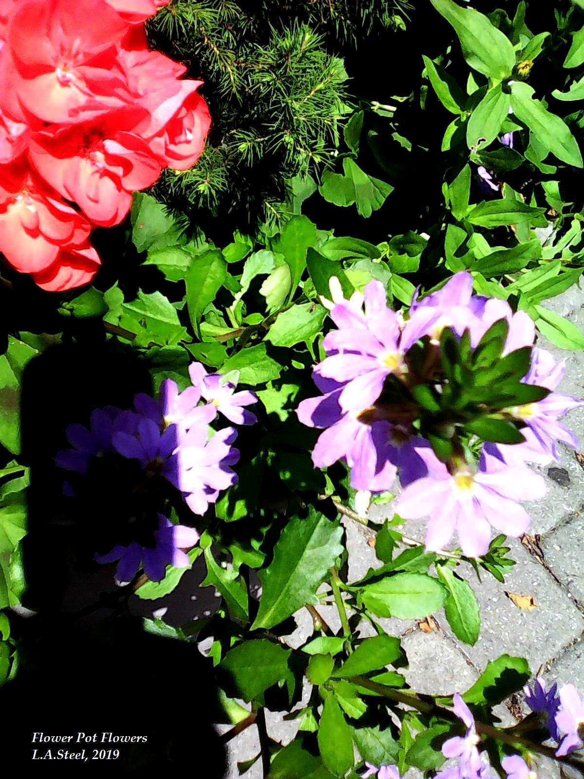 flower pot flowers 2019 1