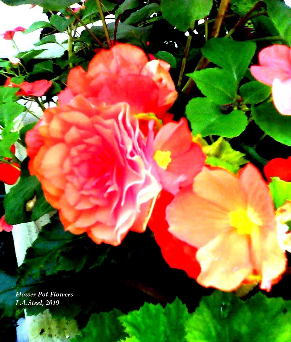 flower pot flowers 3 2019