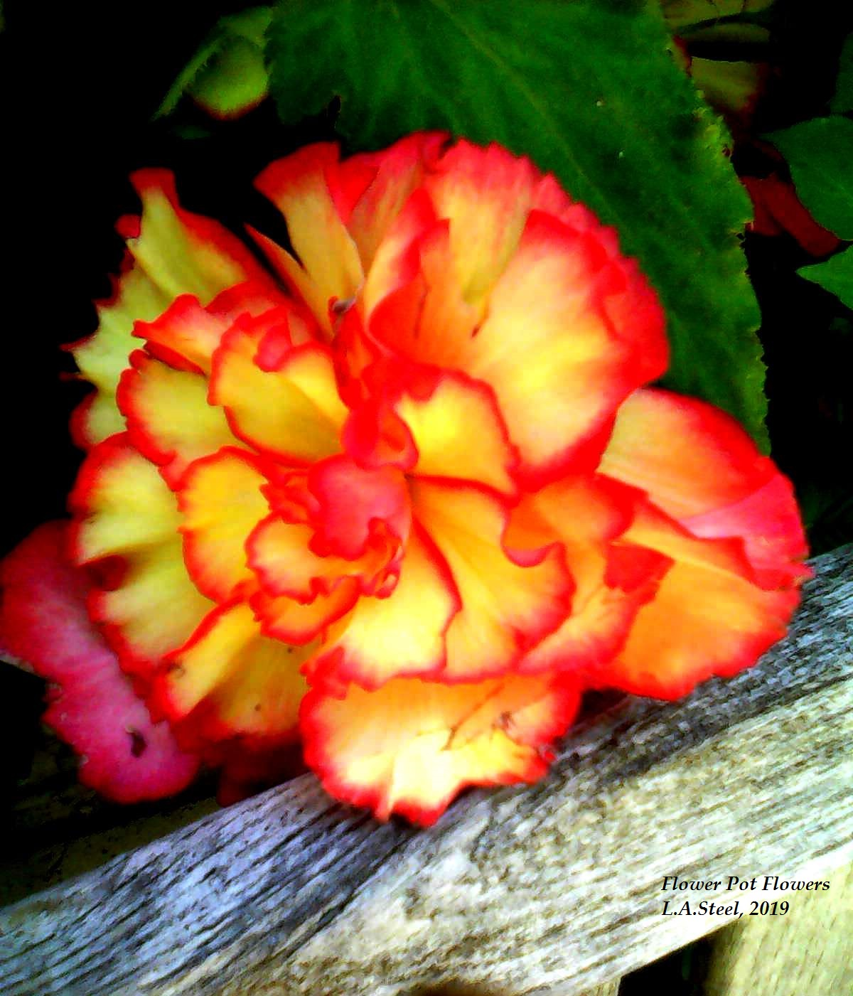 flower pot flowers 4 2019
