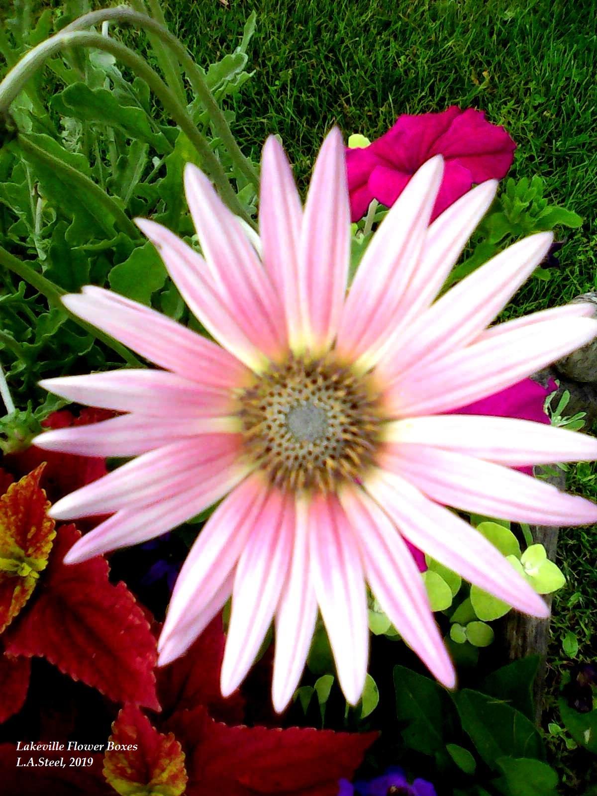 lakeville flower box 2 2019