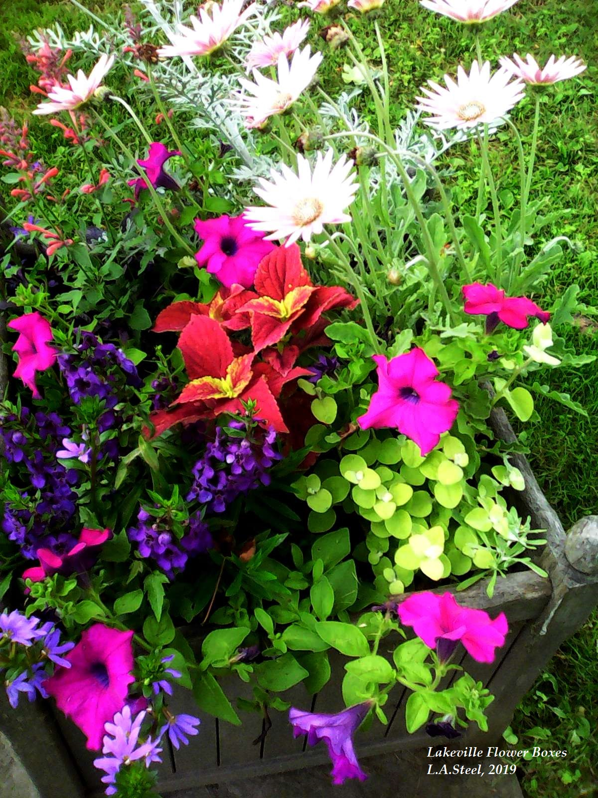 lakeville flower box 6 2019
