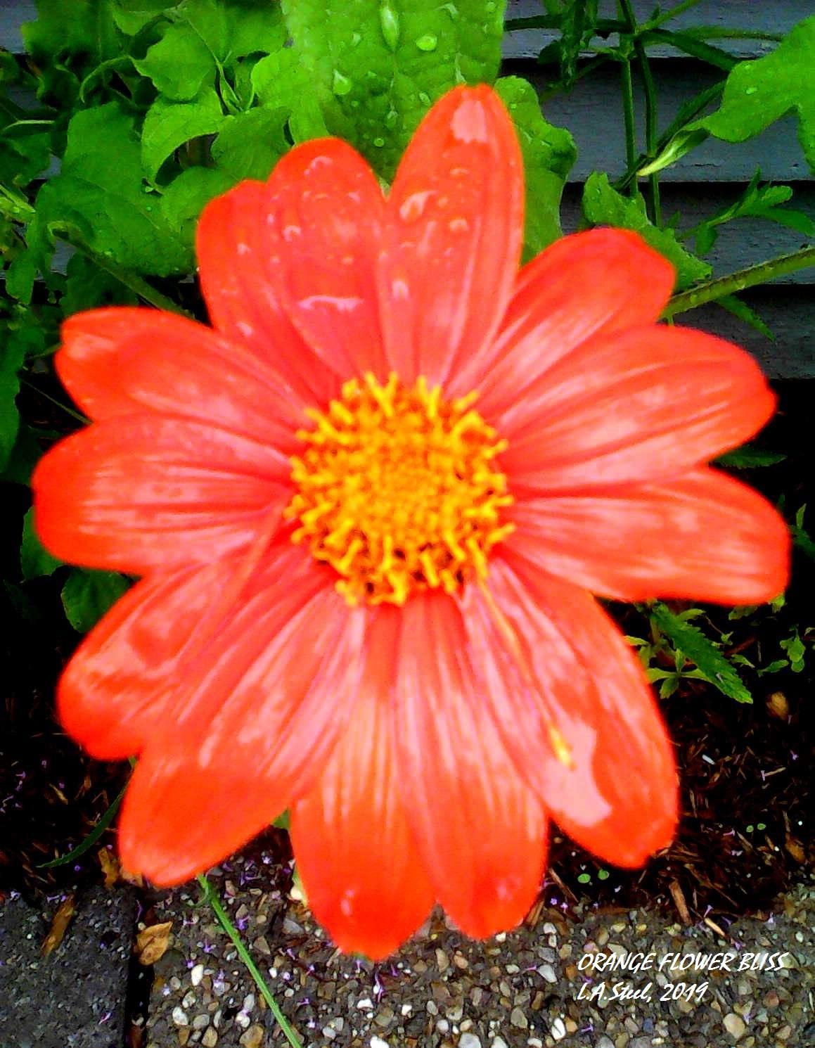 orange flower bliss 2 2019