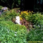 august flower garden 2019